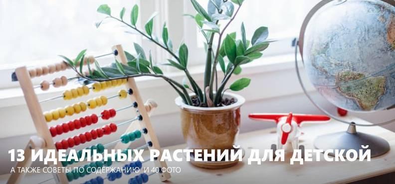 5 полезных комнатных растений для детской