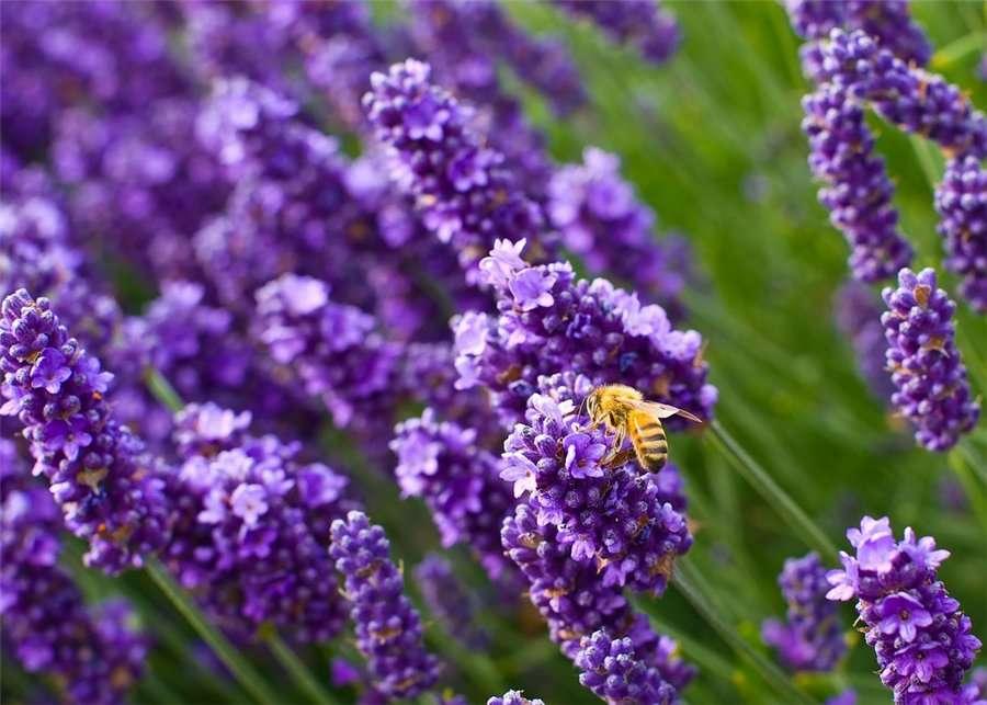 Весенняя обрезка декоративных растений: все тонкости сезонной процедуры