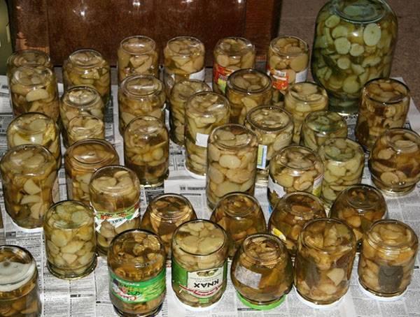 Закатка грибов на зиму – вкусно и сытно