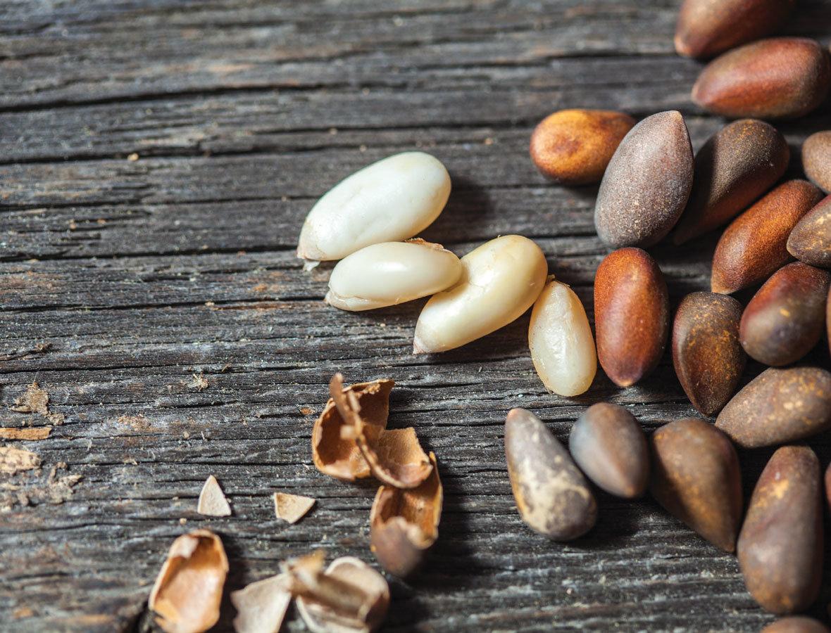 Польза и вред кедровых орехов для организма человека