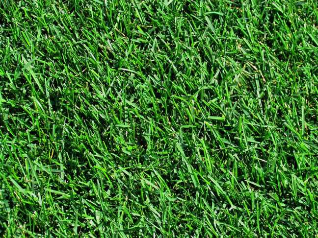 Подготовка газона к зиме: когда последний раз косить газон