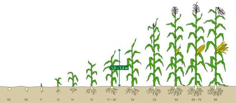 Вегетация растений: сколько длится этот период и можно ли им управлять?