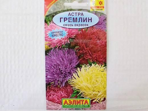 Астры: лучшие сорта, выращивание и размножение