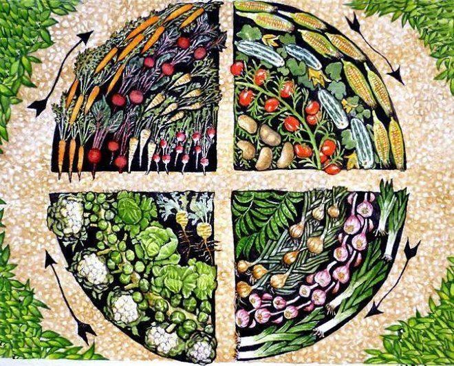Почему так важно соблюдать соседство овощей и секреты смешанных грядок