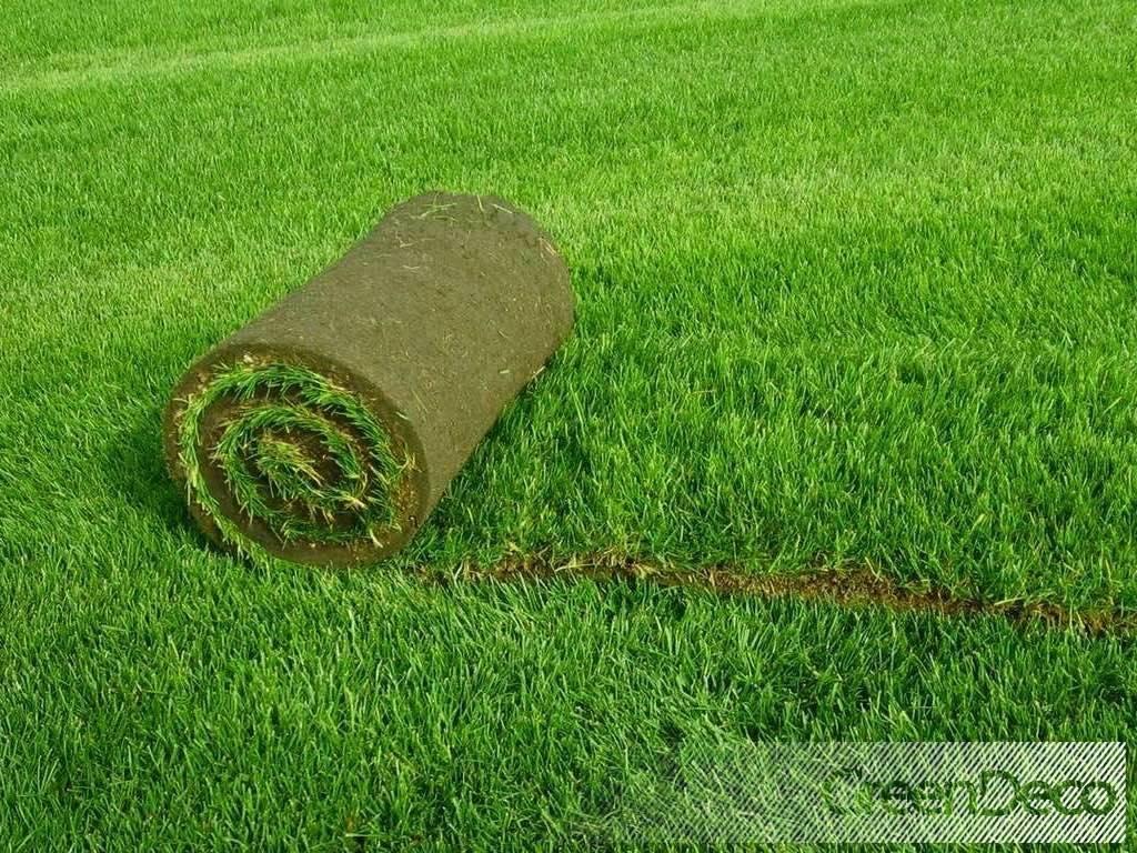 Уход за газоном весной после зимы, летом и осенью. подготовка газона по месяцам