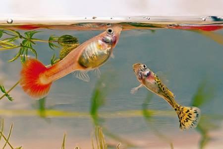 Как правильно кормить своих аквариумных рыбок?