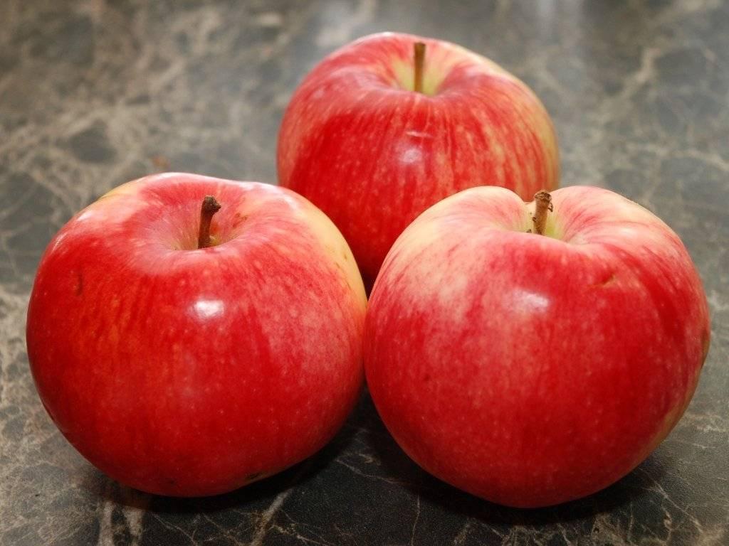 Лучшие сорта яблонь для различных регионов