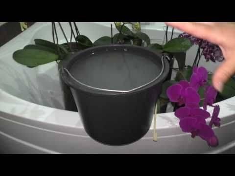 Выбираем подходящее удобрение для цветения орхидей — чем подкормить растение, чтобы оно давало деток?