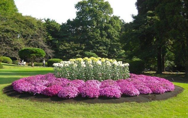 Что нужно хостам весной – 7 секретов пышной листвы