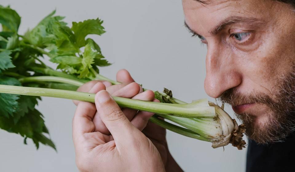 Выращивание корневого сельдерея: все от посева семян на рассаду до ухода в открытом грунте