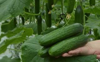 Удобрение азофоска: инструкция по применению на огороде