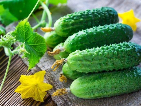 Огурцы - секреты выращивания