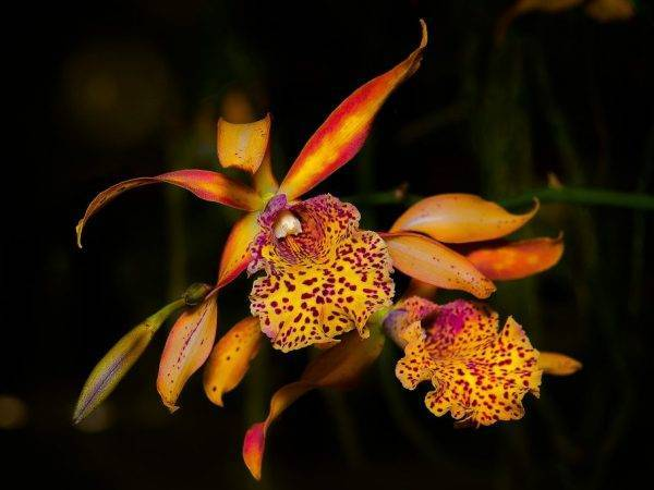 Опадают листья орхидеи — как спасти пожелтевшие листья