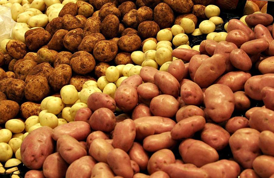 Обзор красных сортов картофеля и особенности выращивания