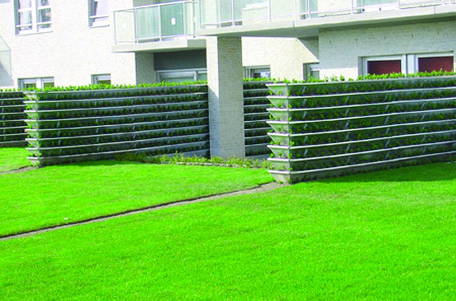 Вертикальное озеленение на приусадебном участке