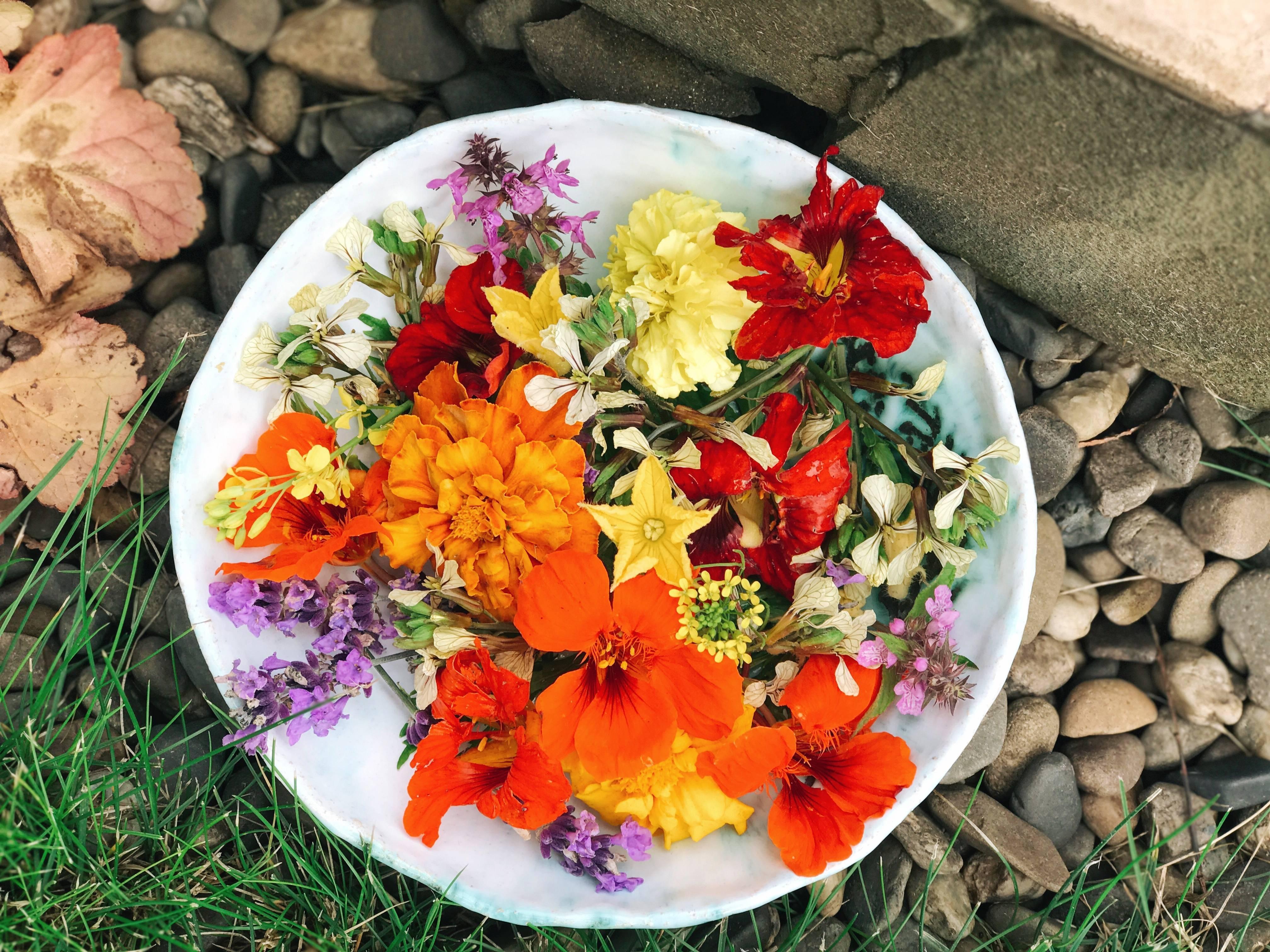 Петуния софистика лайм биколор — хамелеон в вашем саду