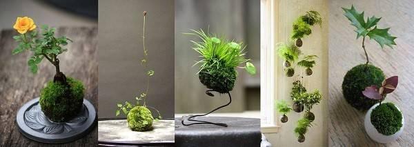 Садовый бонсай – техника и порядок работы