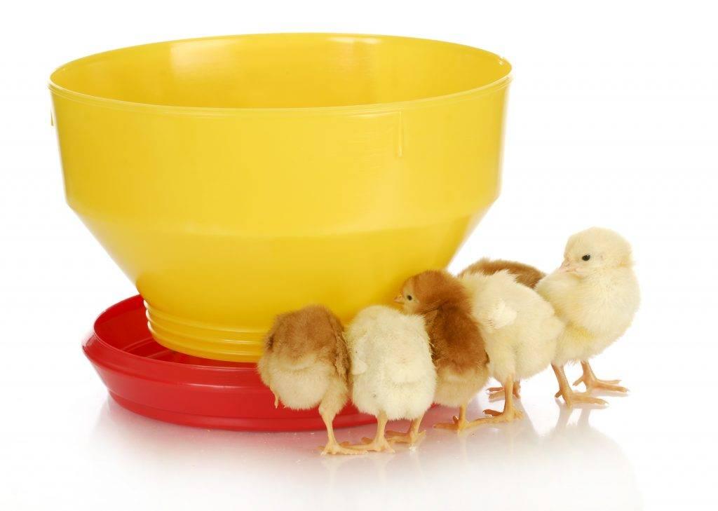 Витамины для цыплят бройлеров — инструкции по применению чиктоника, аминовитала, бмвд, зеленого