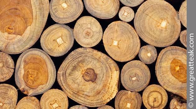 Самые необычные деревья мира: описание, интересные факты