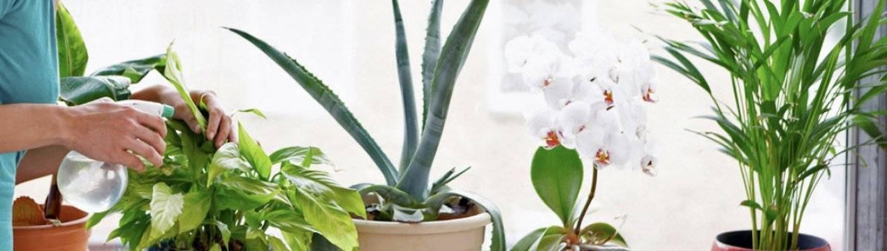 Удобрение для комнатных растений из яичной скорлупы