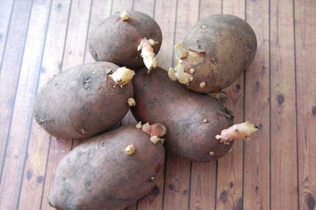 Сажаем картофель: когда можно приступать