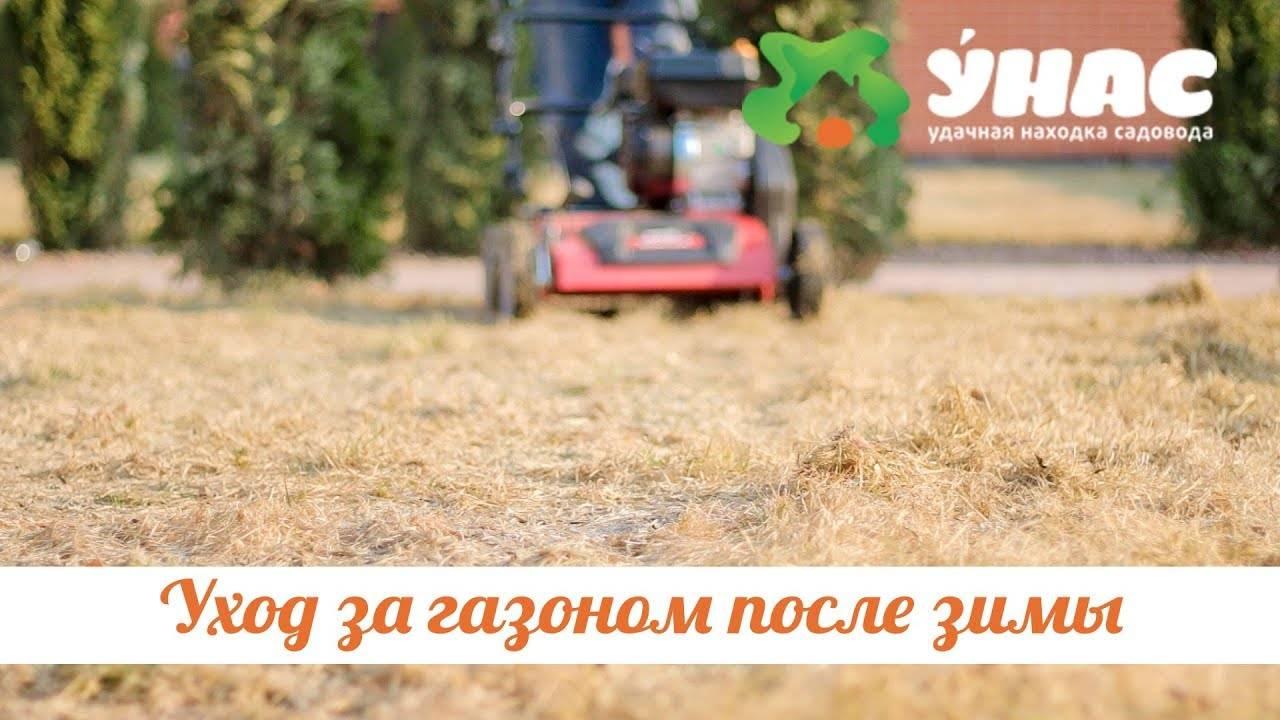 Уход за газоном после зимы: удобрения, системы полива, борьба с сорняками