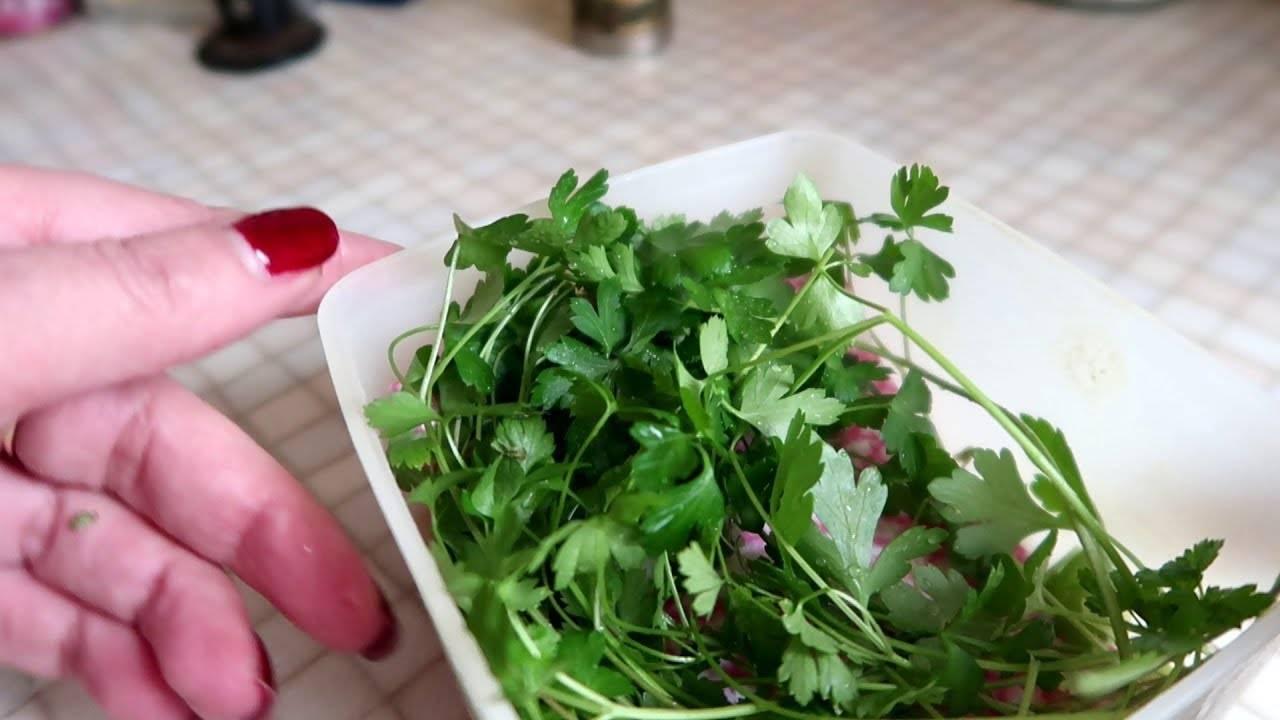 Правила и методы, как сохранить на зиму зелень свежей в холодильнике и сушеной