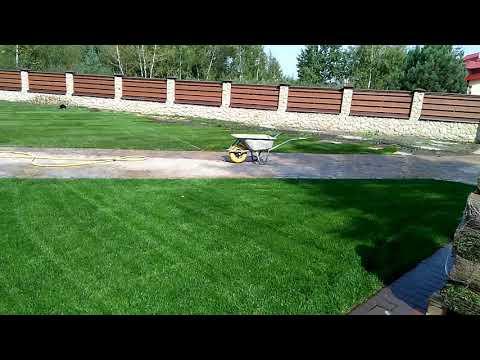 Чем подкормить газон и как его правильно удобрять?
