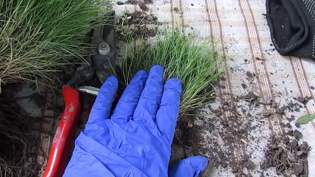 Тонкости выращивания шпината на подоконнике: все этапы и полезные советы