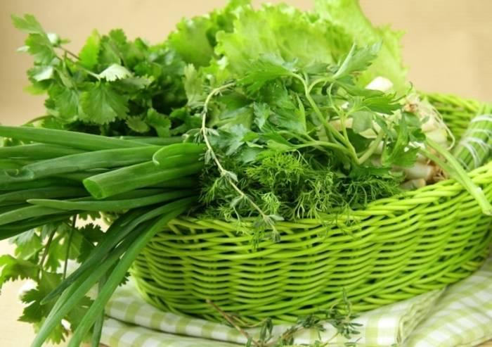 Как сохранить кинзу на зиму, лучшие способы заготовки зелени кориандра — рассмотрим по порядку