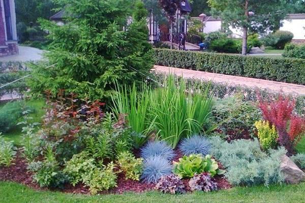 Овсяница посадка и уход выращивание из семян деление куста