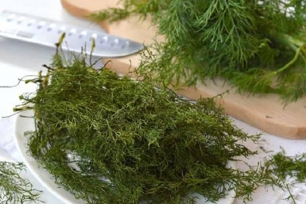 Проверенные варианты хранения укропа в свежем виде и лучшие способы заготовки зелени на зиму