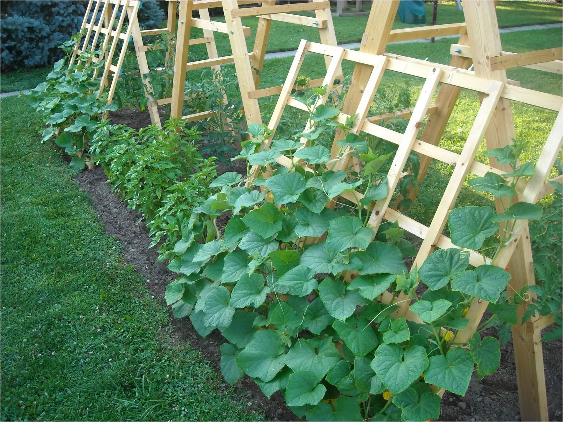 Выращивание огурцов в теплице: советы огородникам