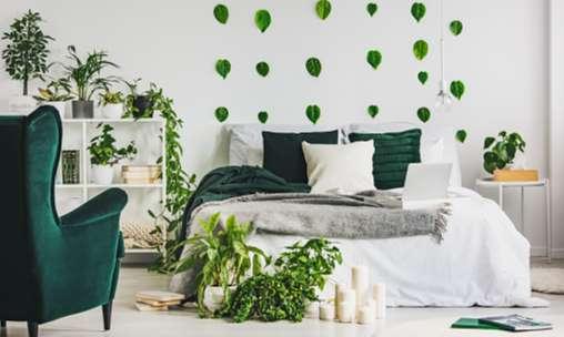 Можно ли в спальне держать комнатные растения?