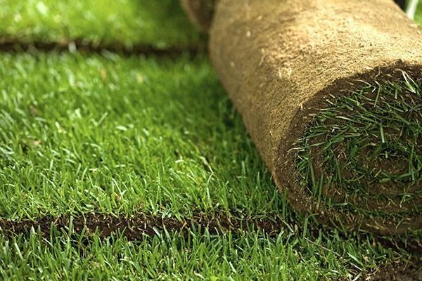 Укладка рулонного газона своими руками: тонкости и рекомендации