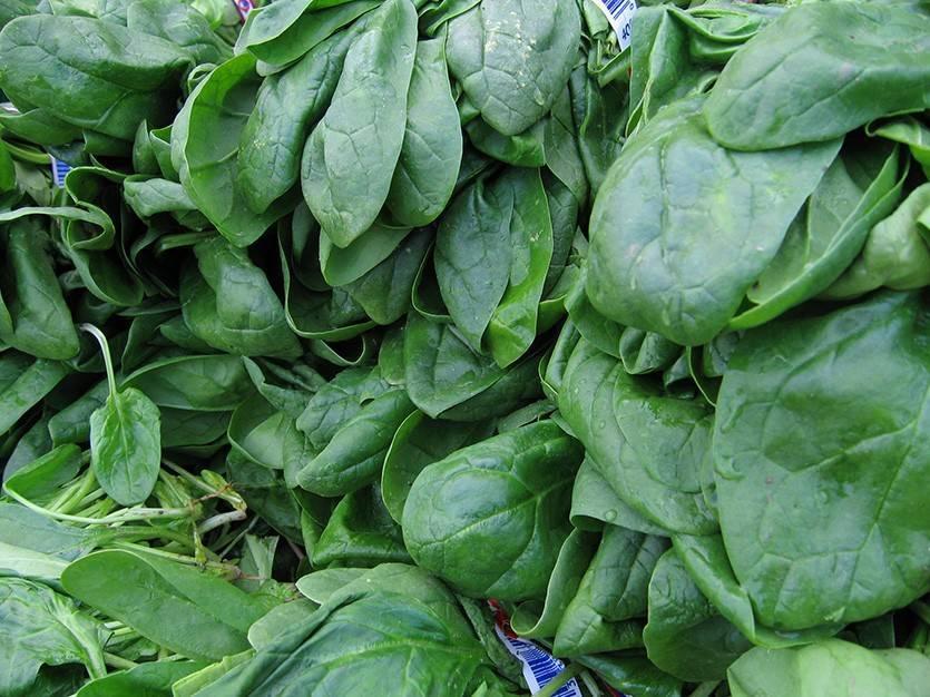 Шпинат земляничный: описание культуры и агротехника