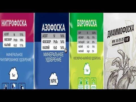 Удобрение азофоска: состав, применение и меры безопасности