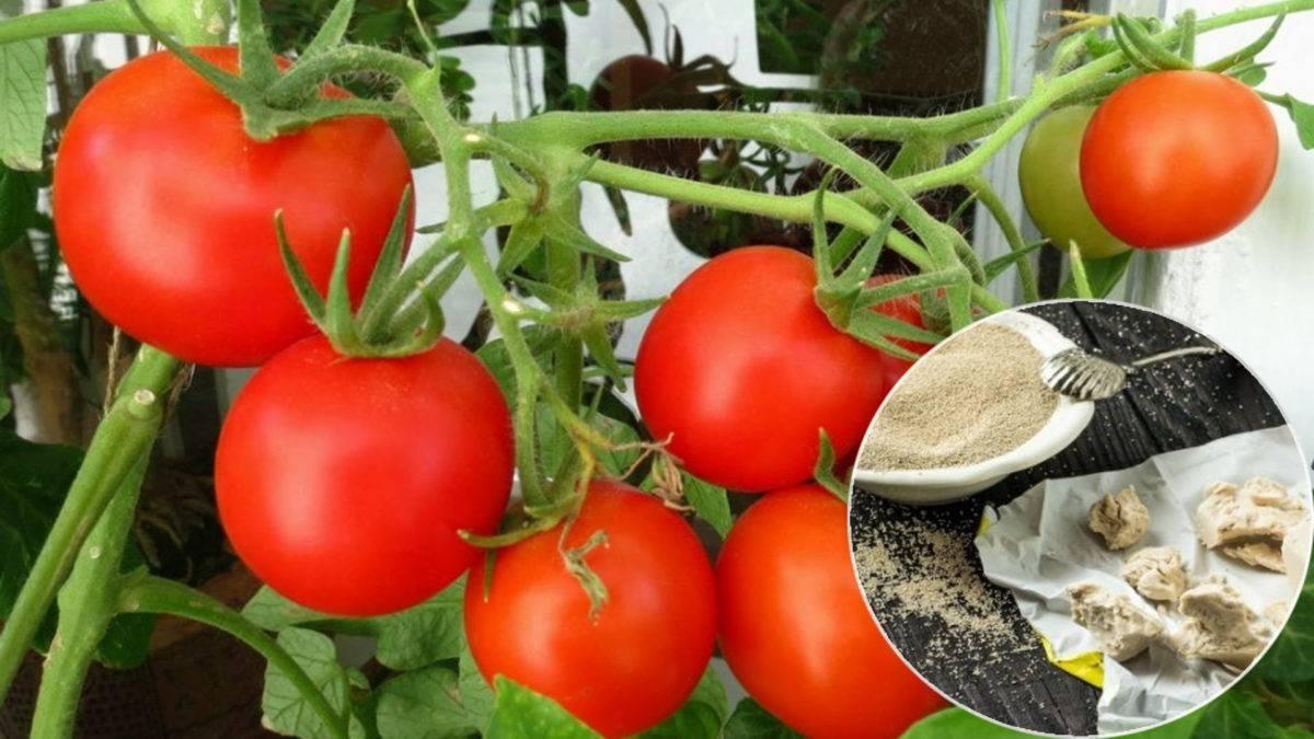 Подкормка огурцов, томатов и перца дрожжами: отзывы и лучшие рецепты