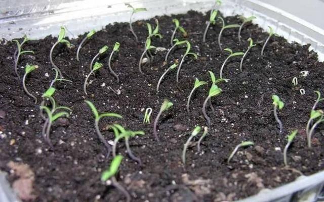 Топ-10 дачных культур для начинающего огородника