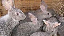 Как осуществляется разведение кроликов в ямах и стоит ли использовать такой метод содержания