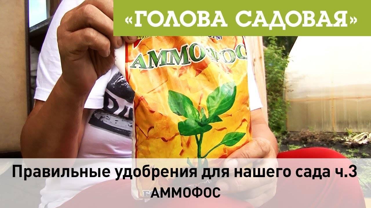 Удобрение аммофоска: состав, инструкция по применению, отзывы