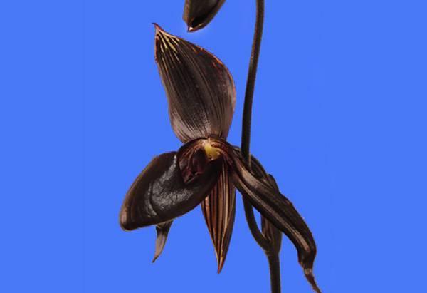 Можно ли спасти орхидею от черной и серой гнили? причины появления и рекомендации, как избавить растение от болезни