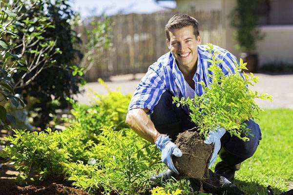 Уход за деревьями и кустарниками весной 2020 года: как ухаживать