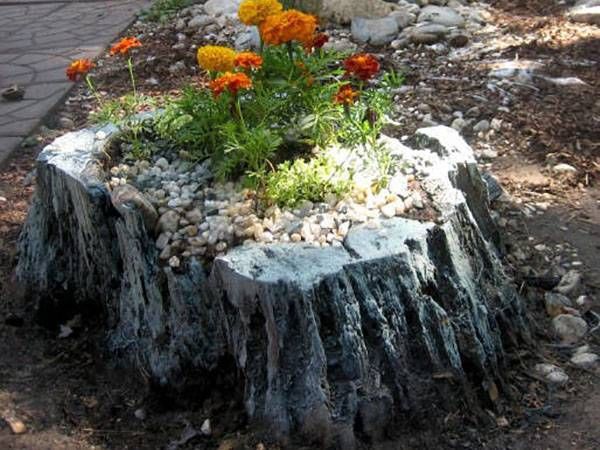 Удивительный рутарий – сад корней на вашем участке