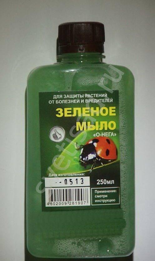Обработка зеленым мылом от тли
