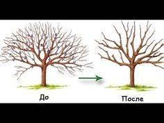 Сроки и правила размножения декоративных кустарников черенкованием
