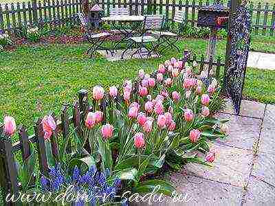 Когда сажать тюльпаны: 4 секрета роскошной клумбы