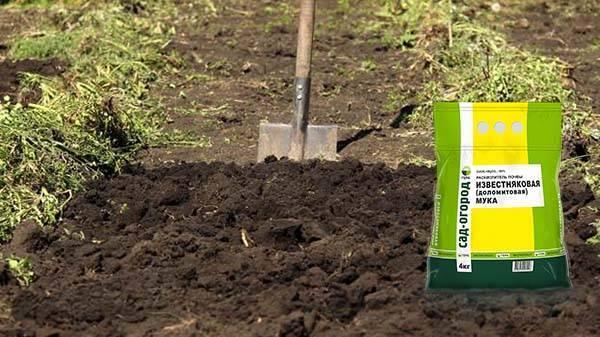 Как избавиться от проволочника в огороде — методы и средства борьбы