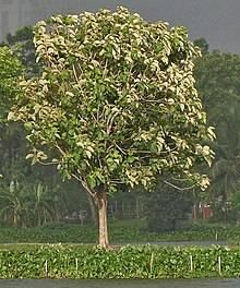 Все самое интересное о тиковом дереве
