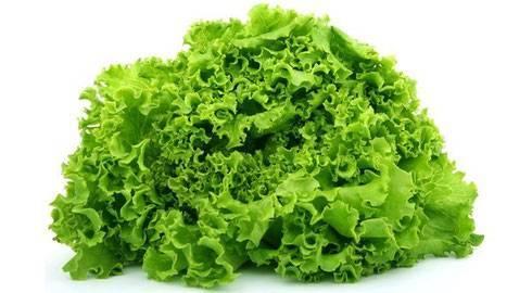Способ для новичков как вырастить салат на подоконнике или балконе
